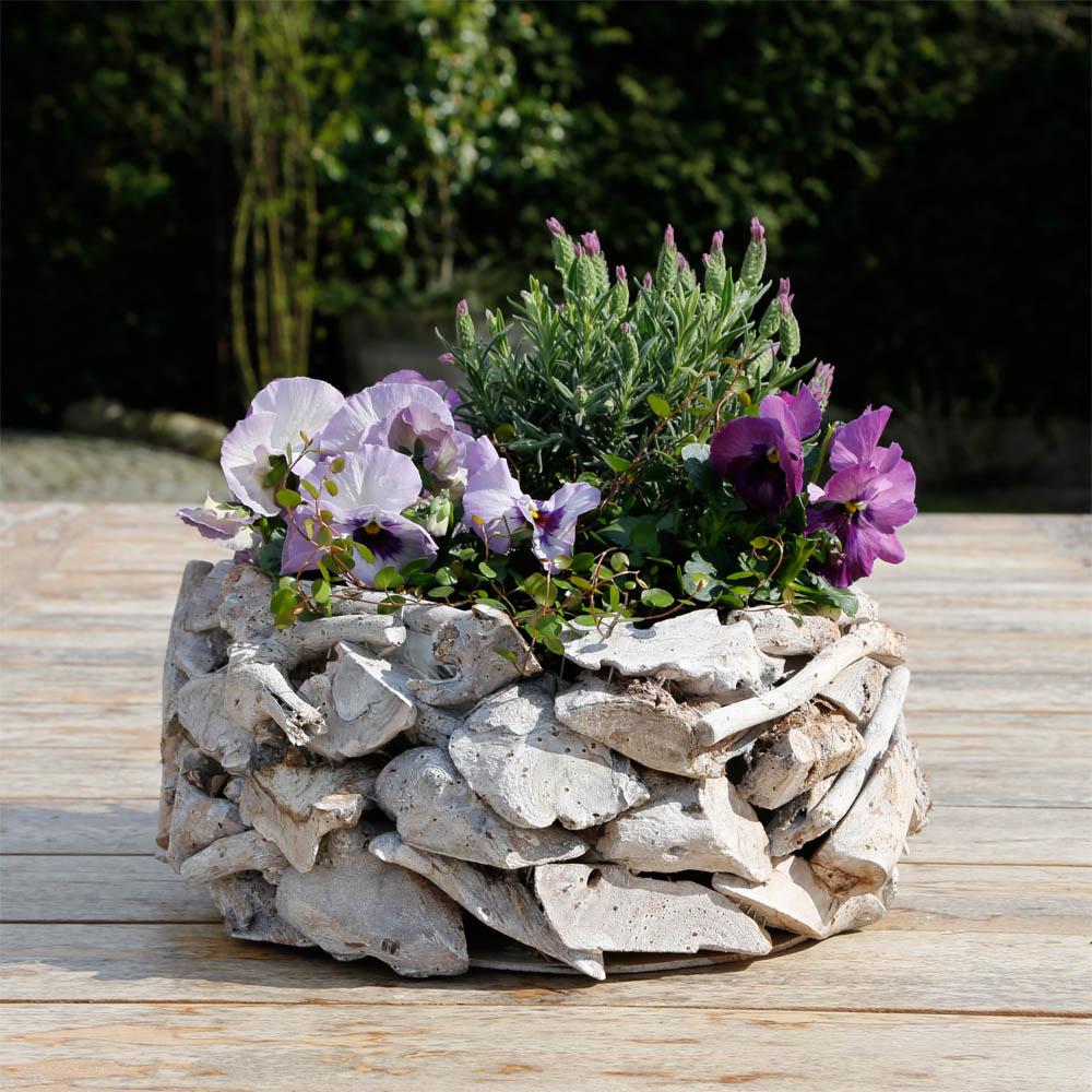 Details Sur Pot De Fleurs Drift Wood Gris En Bois Coquille Corbeille A Treibhaus Optik
